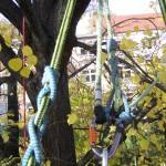 Prusíkovy uzly na pracovním laně a kmenové smyčce